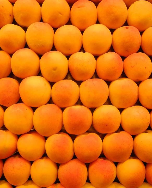 albicocche frutto