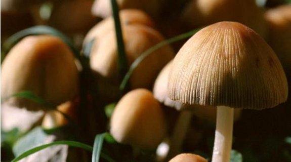 proprietà funghi