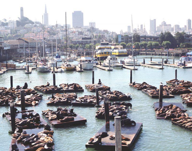 Leoni marini al Fisherman's Warf
