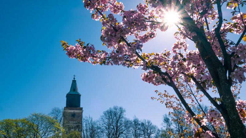 Turku primavera