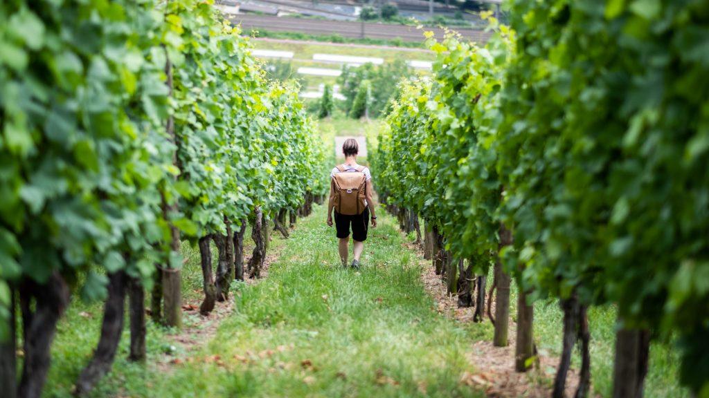 Stuttgart wine